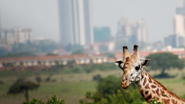 Eine Giraffe vor dem Hintergrund einer Stadt