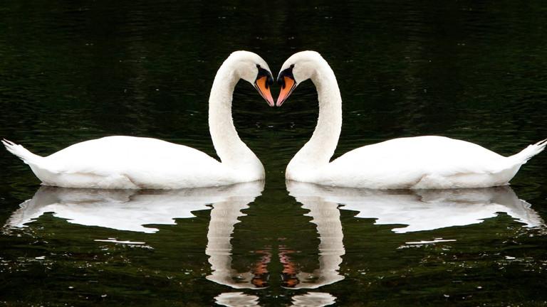 Zwei Sterne bilden ein Herz. Voll romantisch.