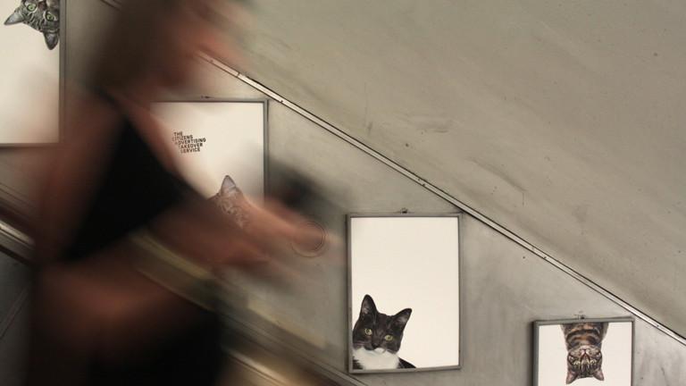 Katzenbilder an einer Rolltreppe der U-Bahn-Station Clapham Common in London, aufgenommen am 15.09.2016. Knapp 700 Unterstützer spendeten für die Aktion in einem Crowdfunding-Projekt umgerechnet rund 27.000 Euro. Mit dem Geld hat die Gruppe, die sich «Glimpse» nennt, alle Werbeflächen der U-Bahnstationen plakatiert.