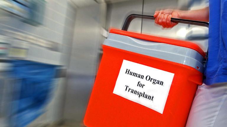 Eine Frau trägt eine Spenderorgan-Transportbox