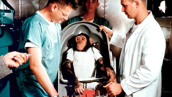 Der Schimpanse Ham wird 1961 von der Nasa ins All geschickt.
