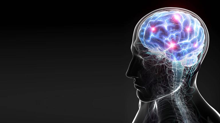 Ein Gehirn. Abbildung von Gehirntätigkeit.