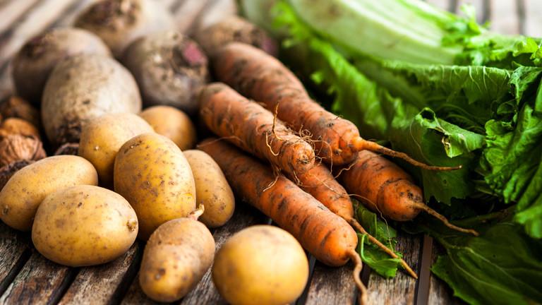 Frisch geerntetes Gemüse.
