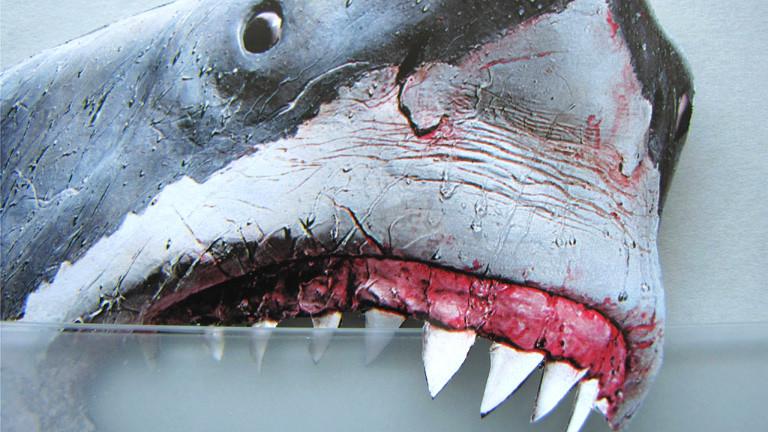 Eine Hai-Attrappe beißt sich am Becherrand fest