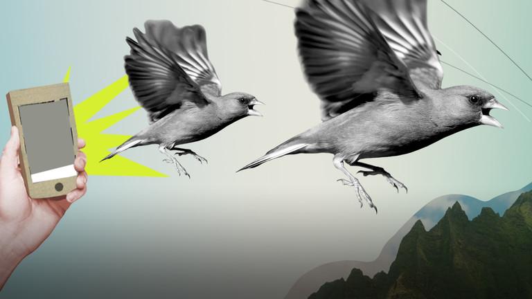 Grafische Darstellung zweier Vögel, die wegfliegen und eine Hand, die ein Smartphone hält.