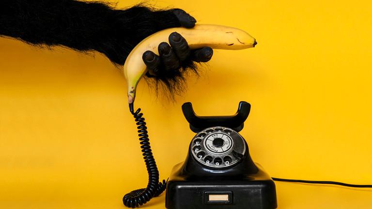 Eine Gorillahand greift zum Bananen-Telefonhörer.