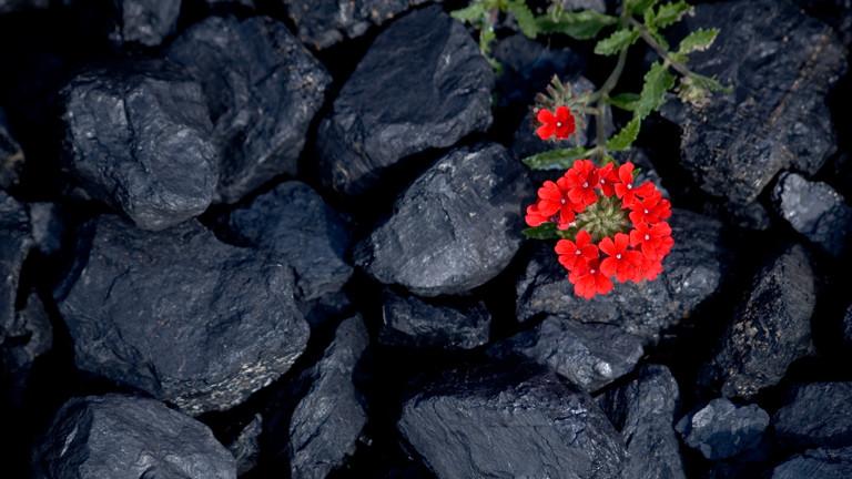 Eine Blume wächst aus einem Kohleberg