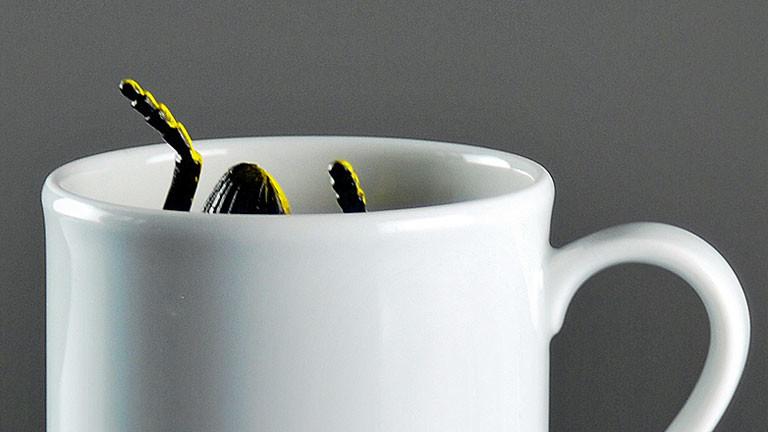 Kakerlake in Kaffeetasse