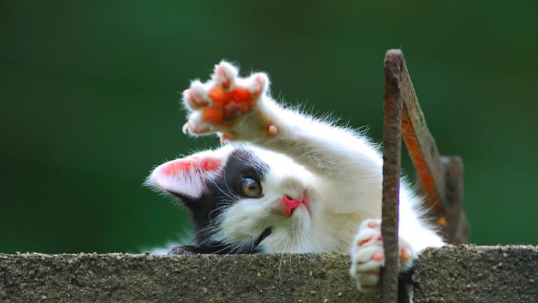 Die Kattarshians Island hat jetzt ein KatzenBig